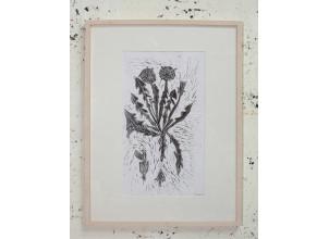 Löwenzahn | Herbarium